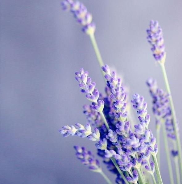 讓每一縷馨香成為居家幸福的味道